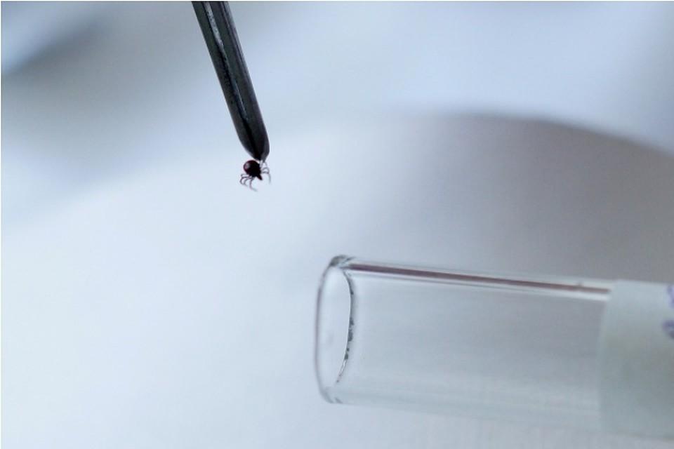 ВТомской области зафиксированы первые в2017г укусы клещей