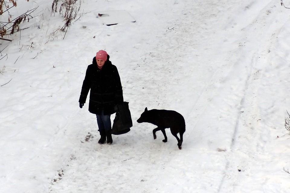 Затри месяца животные покусали неменее 1200 граждан края
