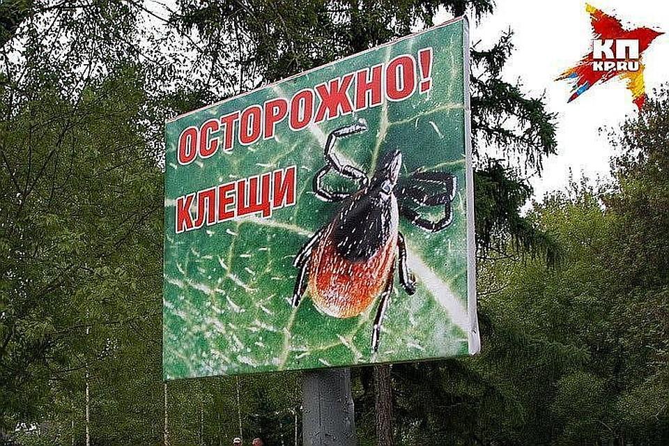 Клещи укусили 513 человек занеделю вНовосибирской области