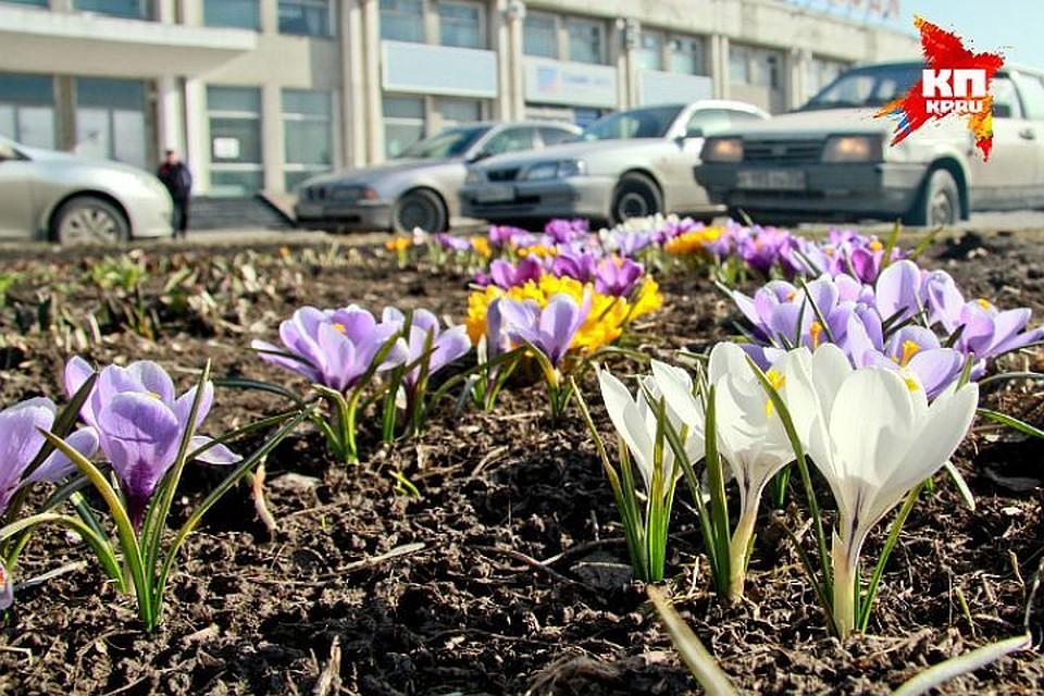 Главный синоптик Петербурга пообещал потепление наследующей неделе