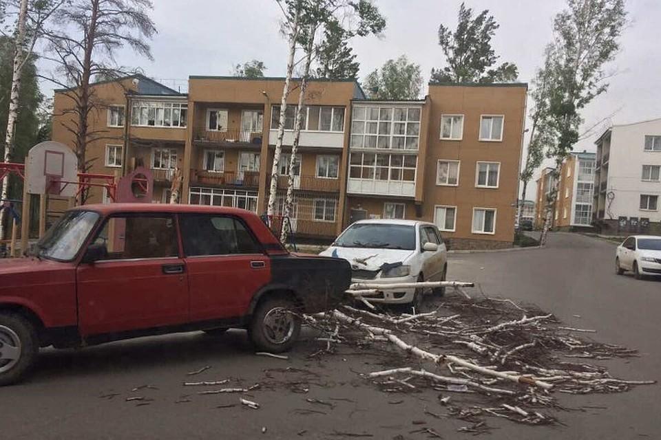 ВИркутске порывистый ветер повалил деревья исдвинул остановку