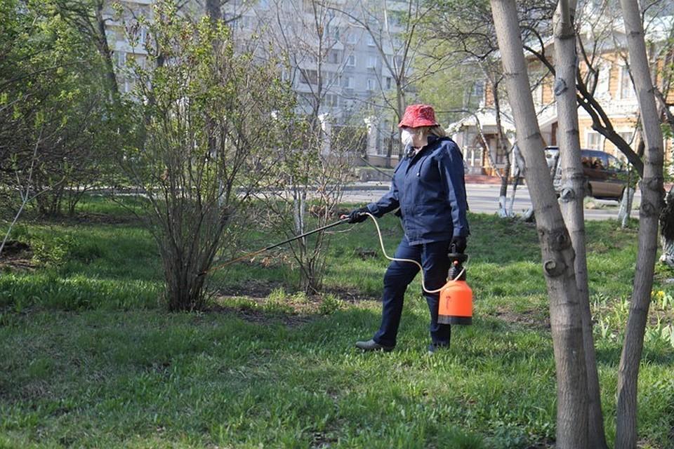 ВКурской области два человека заболели боррелиозом