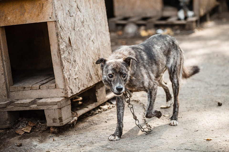 Собачка загрызла двухлетнего ребенка наСтаврополье