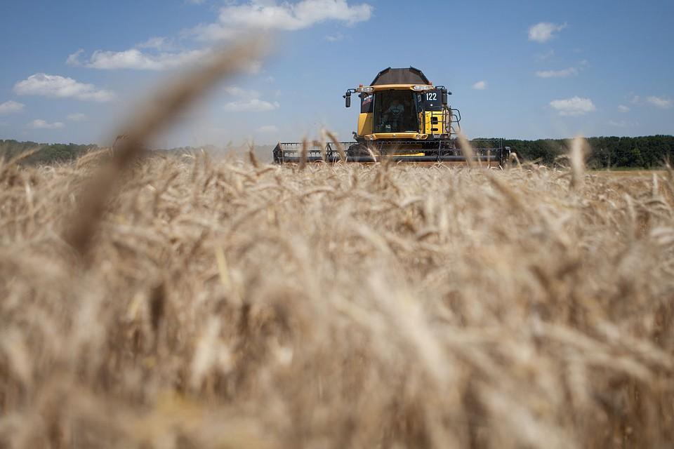 Ставропольские аграрии приступили куборке урожая