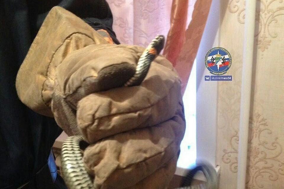 Змей залез вквартиру новосибирцев иперепугал хозяев