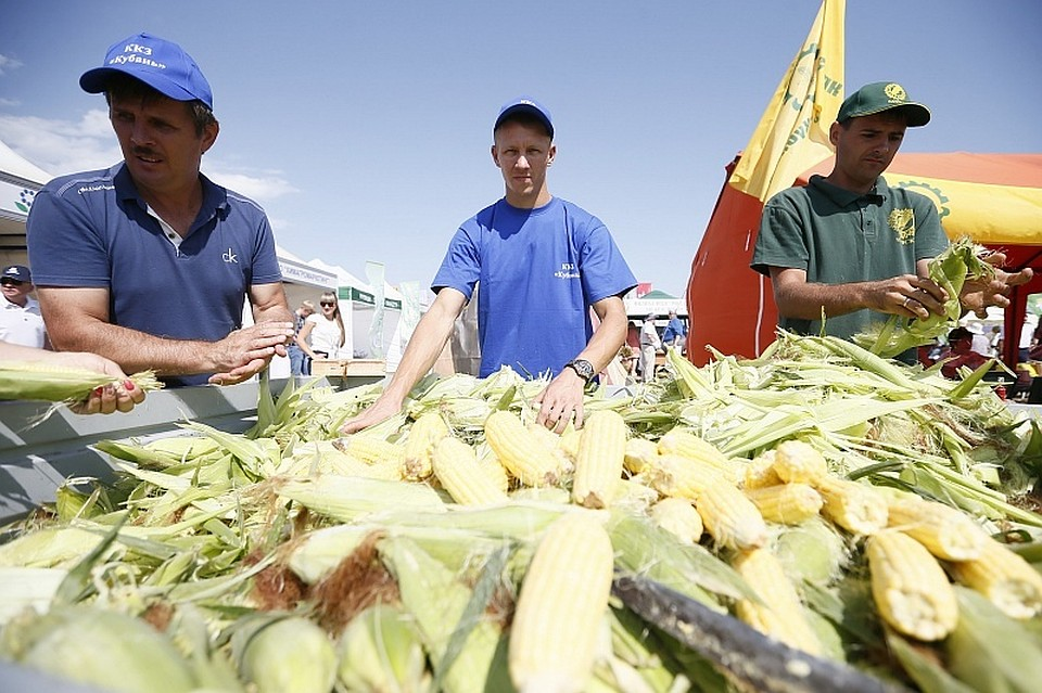 НаКубани построят завод попроизводству семян сои