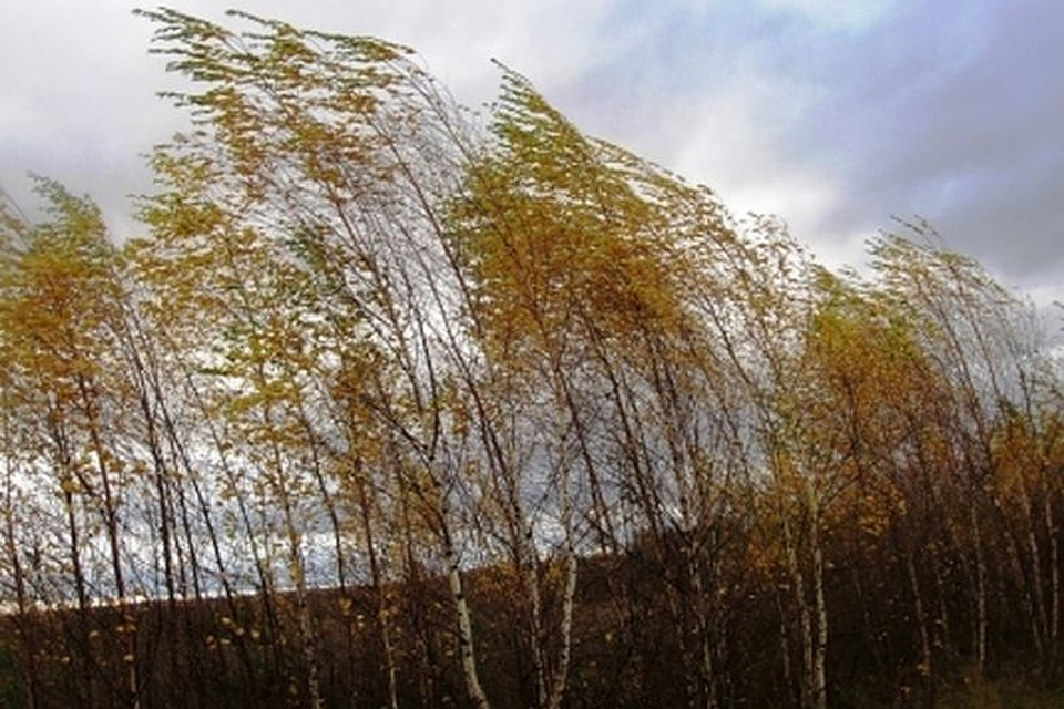 Жителям Новосибирской области необходимо опасаться шквалистого ветра