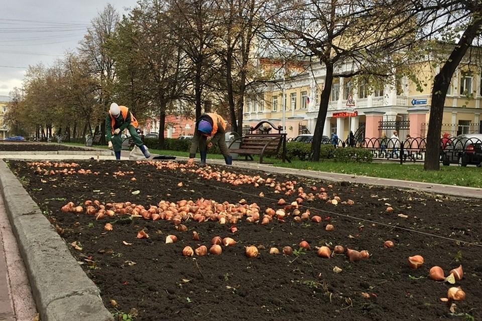 Порядка 2,5 млн. тюльпанов высадят в столицеРФ