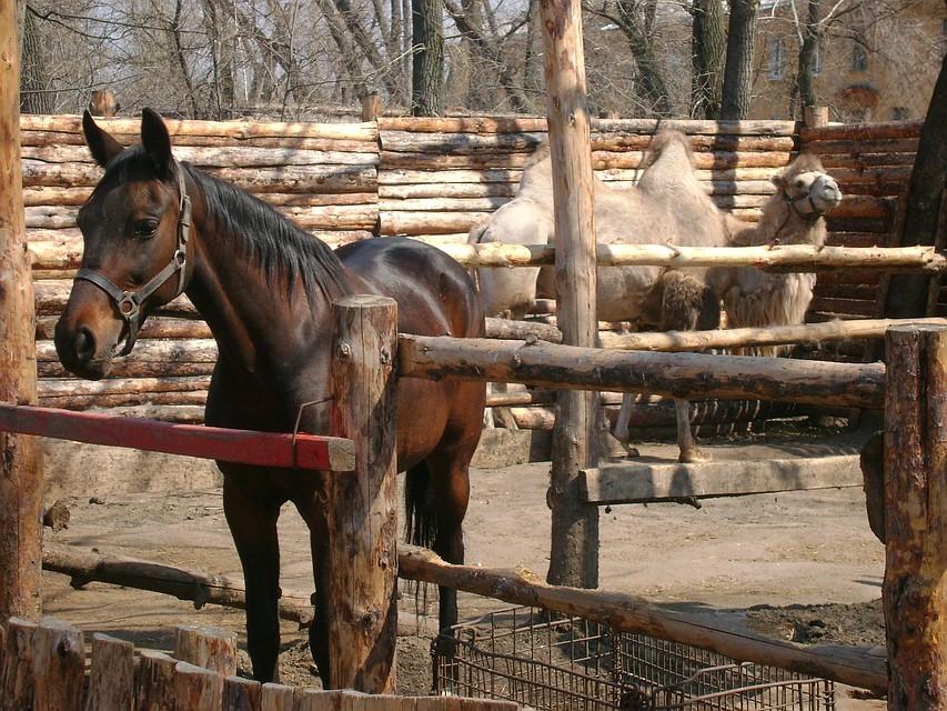 Московский зоопарк сократит режим работы