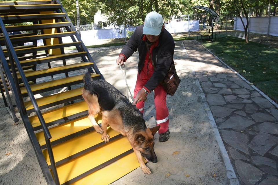 Гавкать разрешается: вРостове открыли первую площадку для выгула собак