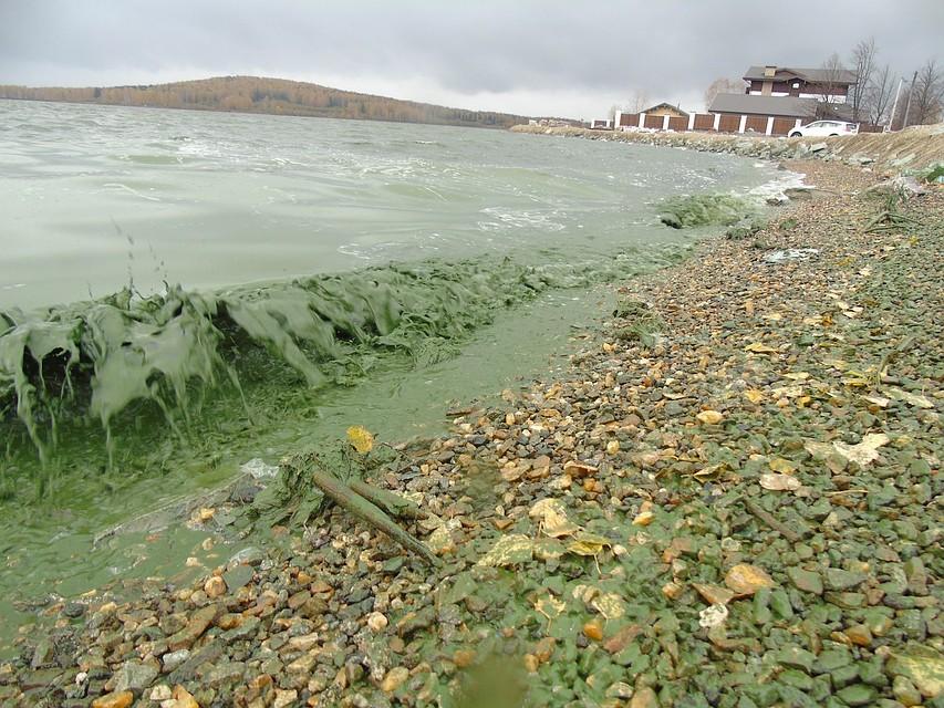 ВНижнем Тагиле снова позеленел водоем, источник питьевой воды