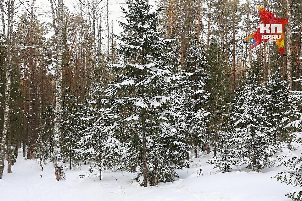 Новое лесоперерабатывающее предприятие появится вКодинске