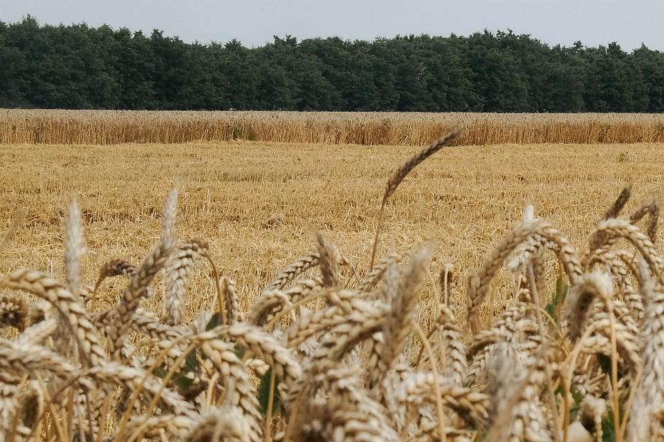 ВЛебяжском районе вынесли вердикт экс-председателю сельхозпредприятия