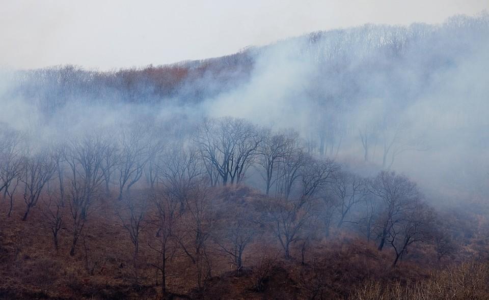 Владивосток вновь окутало дымом из-за лесных пожаров