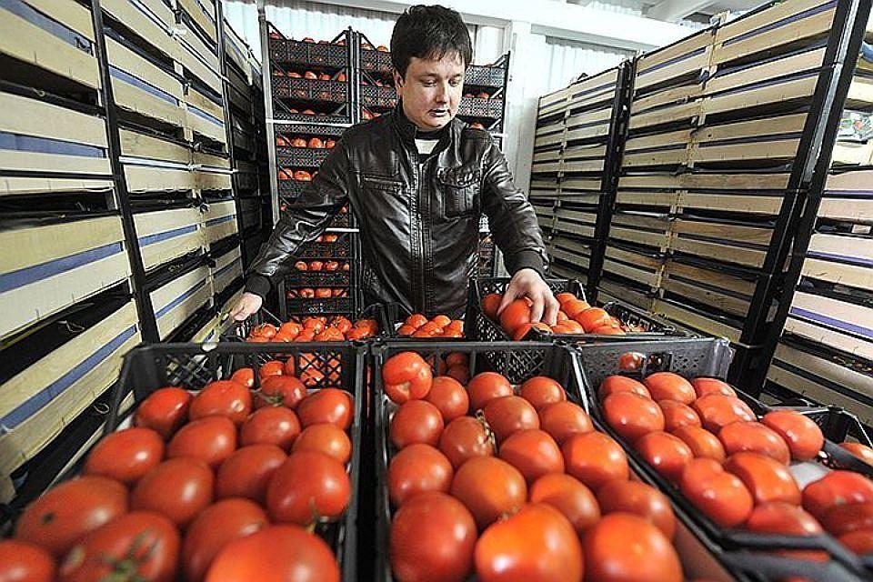 Россельхознадзор позволил ввоз томатов еще с 5-ти турецких учреждений