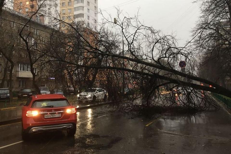 В итоге шторма в столицеРФ пострадали 12 человек