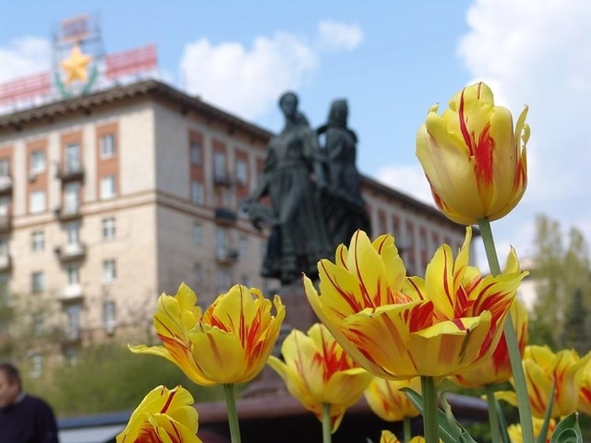 Волгоградские улицы украсят 130 тыс. цветов
