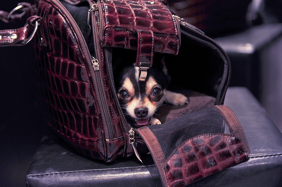 Собачка открыла багажный отсек боинга наподлете к столицеРФ
