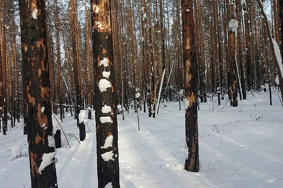 Министр лесного комплекса Иркутской области был схвачен вмосковском аэропорту