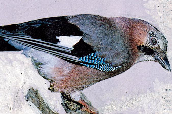 Картинки зимующих птиц томской облости