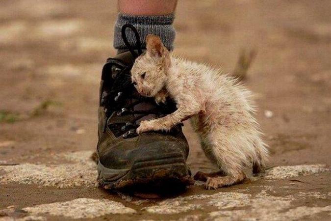Картинки по запросу фото бездомных котов