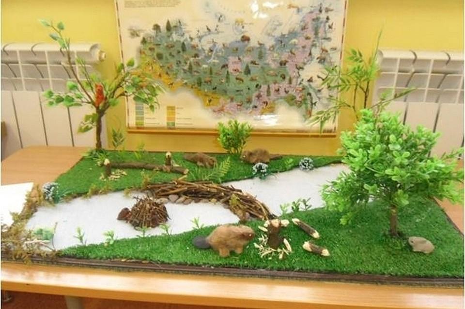 Макеты по экологии в детском саду своими руками 1