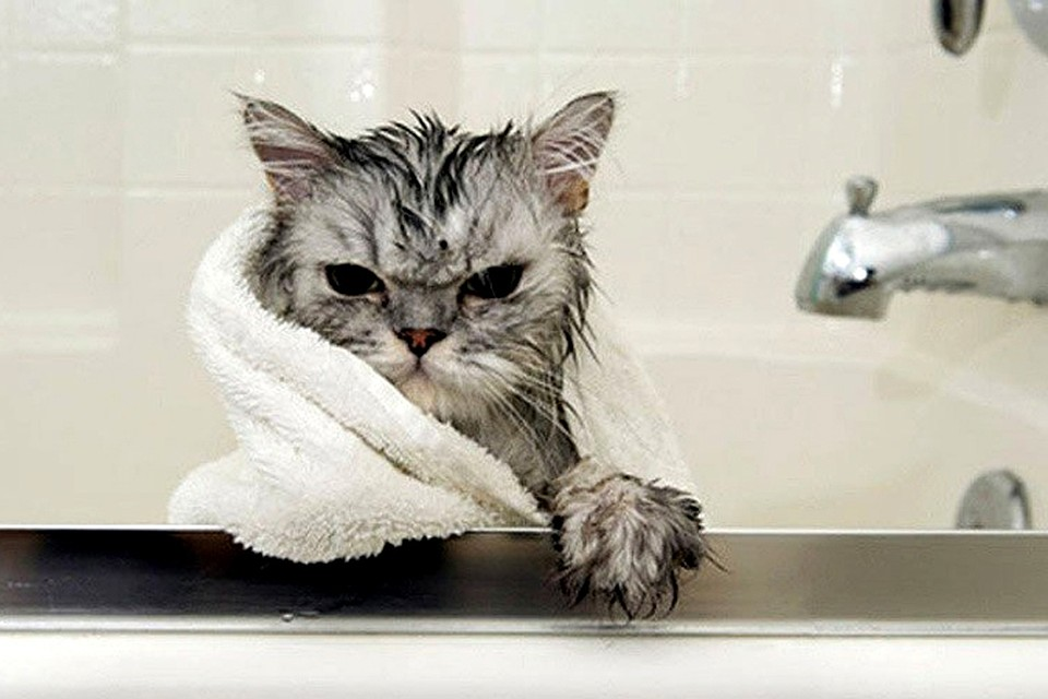 Коты не любят купаться. И это мягко сказано! Фото: СОЦСЕТИ