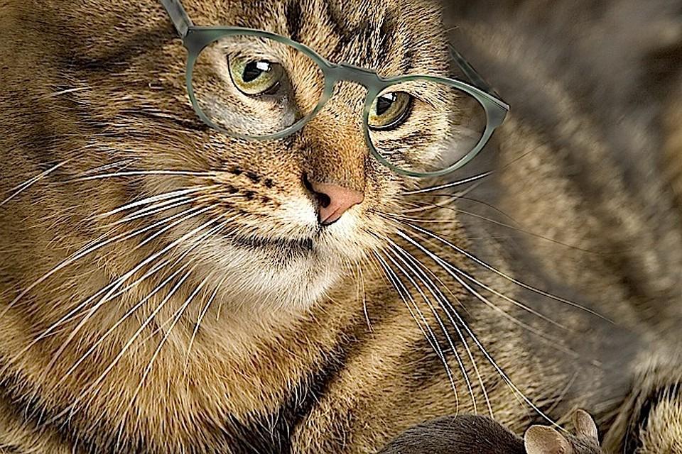 ожирение у кошек как лечить