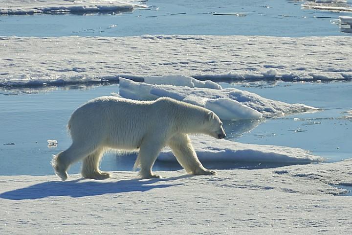 Если ничего не изменить, то к 2100 году на Земле потеплеет на 4 – 4, 5 градуса по сравнению с доиндустриальной эпохой, то есть с концом 19 века