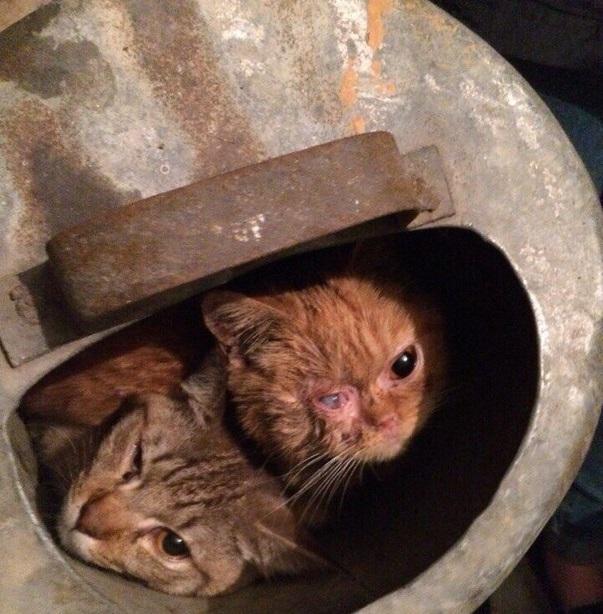Хозяйке кошек вквартире поул.Мельникайте угрожает 1 год лишения свободы