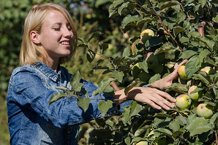 Если у вас уродилось много яблок, почему бы не сварить варенье?