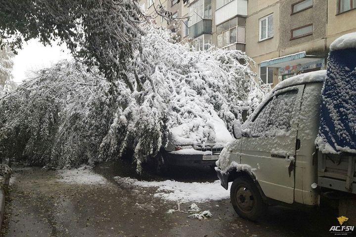 ВНовосибирске заснеженные деревья масссово падают наавтомобили