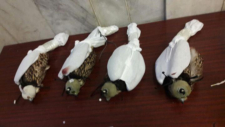Несчастных пернатых скрутили и надели колпаки на головы.