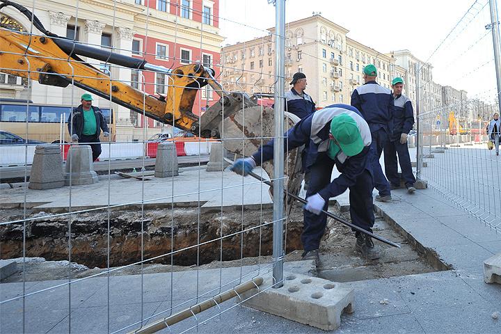 Первую высадку лип наТверской для удобства жителей столицы проведут 30октября