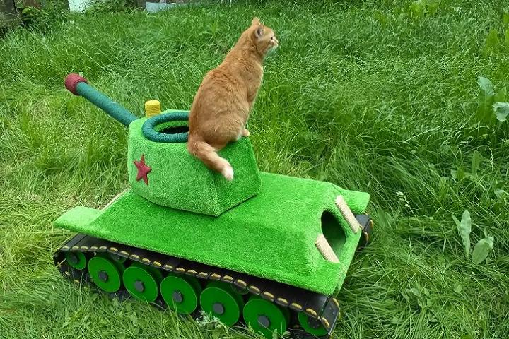 Новосибирец смастерил для своего кота самоходный танк