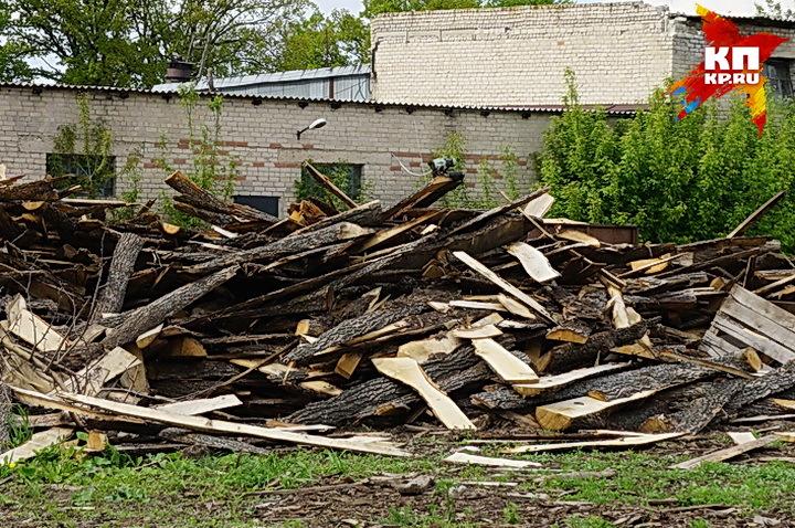 ВВоронеже предприниматель, прикрываясь субботником, вырубил деревья набульваре Победы