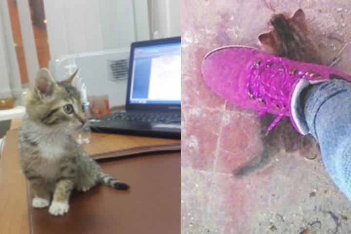 Котенок продолжает жить у одной из девочек, он здоров. ФОТО: СУ СК РФ по Хабаровскому краю + социальные сети