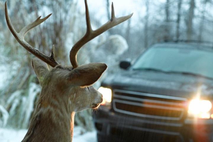 В Швеции число дорожных происшествий с участием животных достигло рекордного уровня. Фото: с сайта diapazon.kz