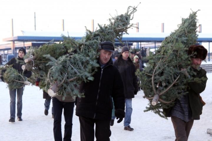 На текущей неделе вКурске раскроются «елочные базары»