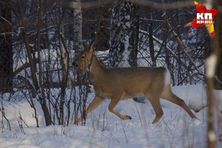 ВСвердловской области задержали охотника, застрелившего товарища вместо косули