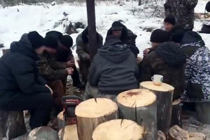 """Четыре группы """"черных"""" лесорубов действовали в Осинском районе Иркутской области"""