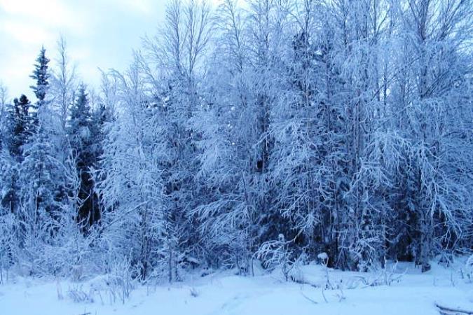 4 января в Югре ожидается метель, будет морозно