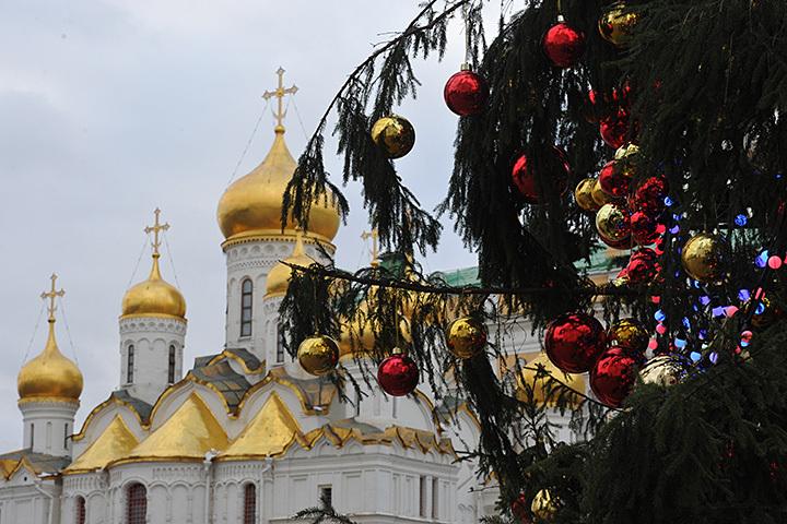 ВРФ изшишек кремлёвской новогодней ёлки вырастят новые ели