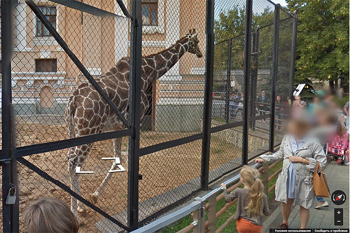 Накартах Google появились панорамы Московского зоопарка
