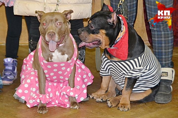 ВВоронеже пройдут танцевальные состязания собак