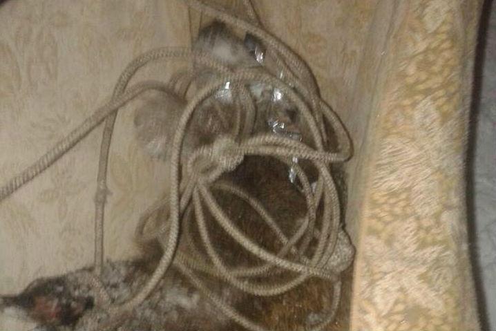 ВТольятти натерритории детского сада ловили 50-килограммового кабана