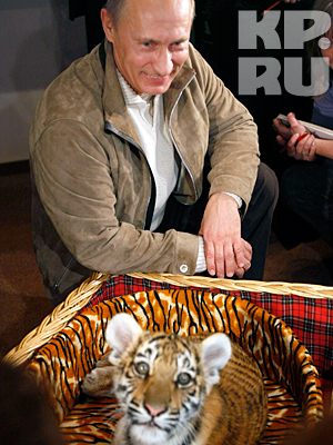 Премьер-министру презентовали уссурийского тигренка. Имя дарителя Владимир Владимирович предпочел не разглашать
