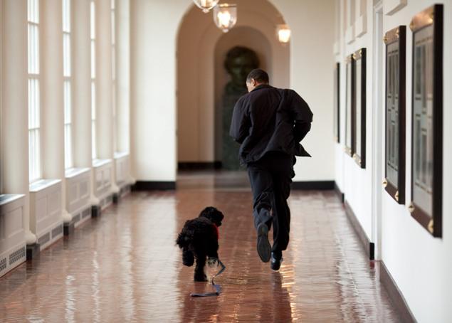 Президент США не против пробежаться по коридорам своей резиденции с одним из домашних любимцев Фото: GLOBAL LOOK PRESS