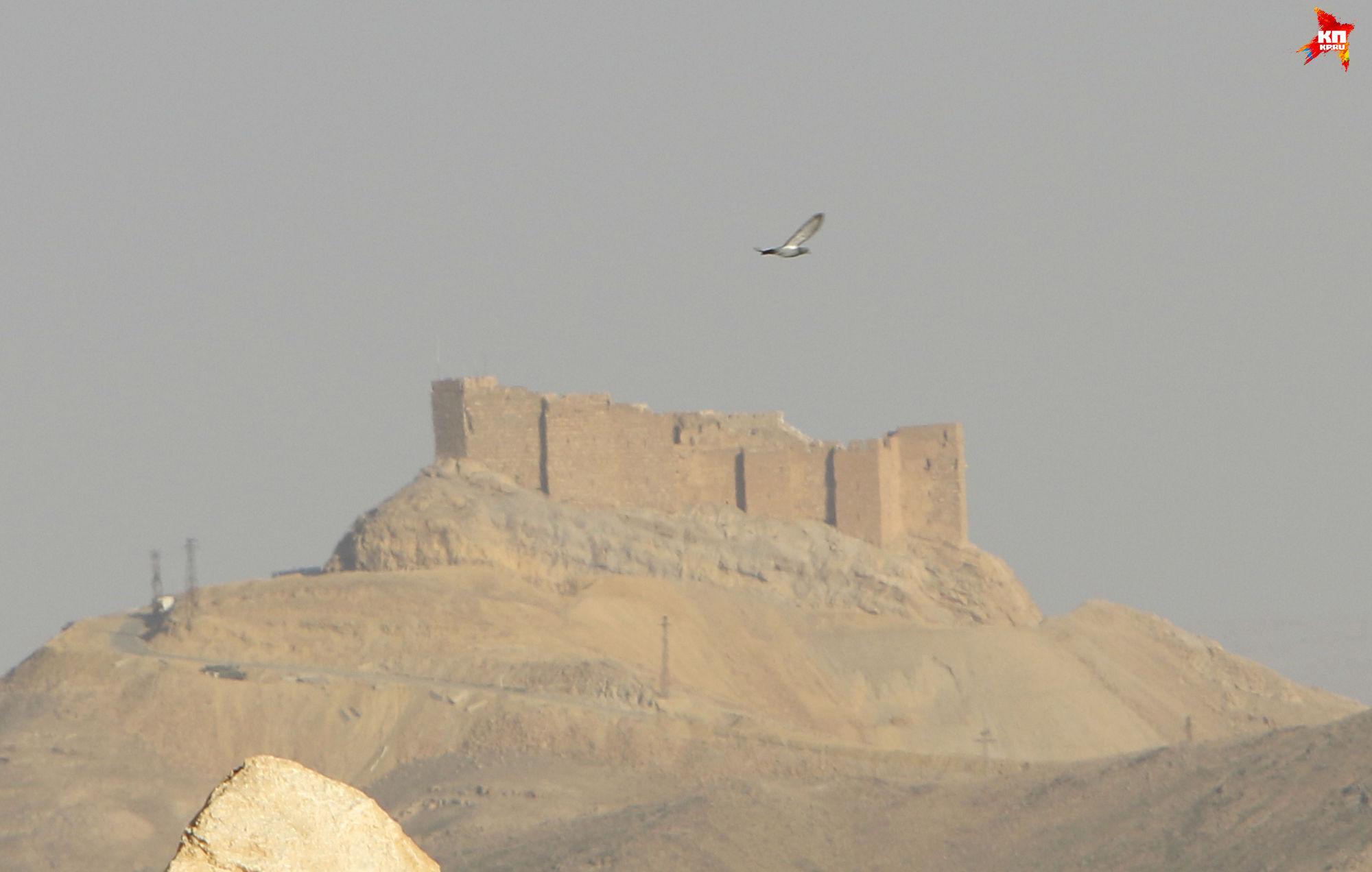 Сторожевая крепость над Пальмирой. Фото: Александр КОЦ, Дмитрий СТЕШИН