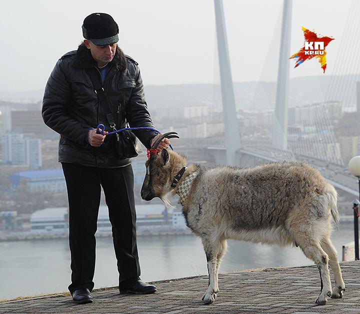 Накануне встречи с женихом козе Меркель показали достопримечательности Владивостока Фото: Владимир ВЕЛЕНГУРИН